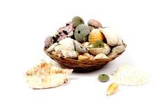 Shelles en la cesta imagenes de archivo