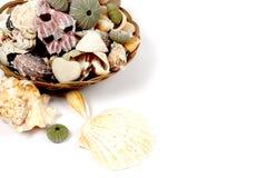 Shelles en la cesta imagen de archivo