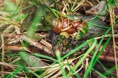 Shelles en la hierba Fotografía de archivo