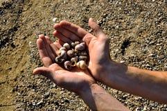 Shelles en la mano abierta del hombre Fotos de archivo