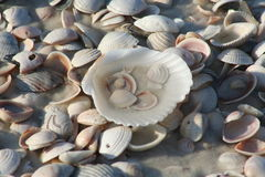 Shelles en la playa fotos de archivo