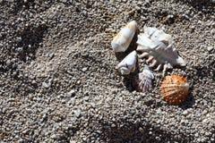 Shelles en la playa Foto de archivo libre de regalías