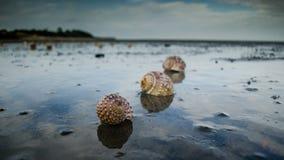 Shelles en la playa Imagenes de archivo