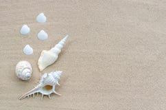 Shelles en la playa Fotografía de archivo libre de regalías