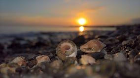 Shelles en la playa Imágenes de archivo libres de regalías