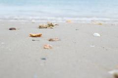 Shelles en la playa de la arena Imagen de archivo libre de regalías