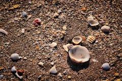 Shelles en la playa de la Florida foto de archivo libre de regalías