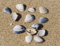 Shelles en una playa Fotografía de archivo libre de regalías