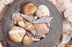 Shelles en urna Imagen de archivo libre de regalías