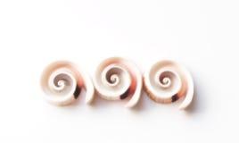 Shelles espirales Foto de archivo libre de regalías