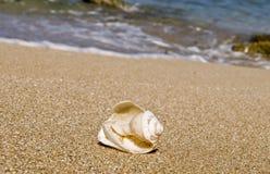 Shelles quebrados Imágenes de archivo libres de regalías