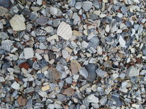 Shelles quebrados del mar Foto de archivo