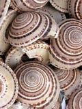 Shelles redondos del mar Fotografía de archivo
