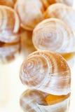 Shelles vacíos del caracol imagenes de archivo