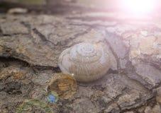 Shelles vacíos del caracol Imágenes de archivo libres de regalías