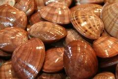 Shelles Vongole Fotografía de archivo