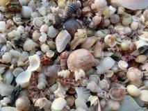 Shelles y arena imágenes de archivo libres de regalías