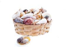 Shelles y cesta imagen de archivo libre de regalías