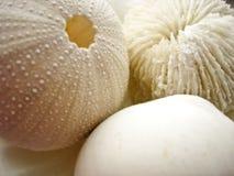 Shelles y coral Imagenes de archivo