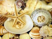 Shelles y estrellas Fotografía de archivo