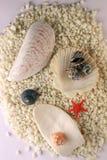 Shelles y estrellas de mar Fotografía de archivo