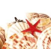 Shelles y estrellas de mar foto de archivo