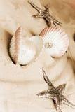 Shelles y estrellas de mar fotografía de archivo libre de regalías