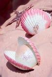 Shelles y estrellas de mar fotos de archivo libres de regalías