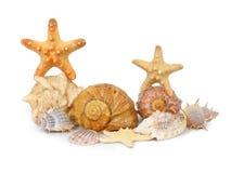 Shelles y estrellas de mar aislados en blanco Fotos de archivo libres de regalías