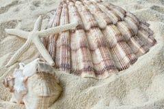 Shelles y estrellas de mar en arena fotografía de archivo