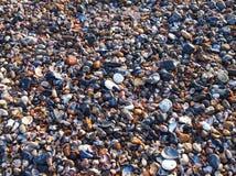 Shelles y fondo texturizado guijarro Foto de archivo