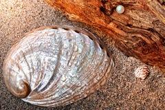 Shelles y perla fotos de archivo libres de regalías