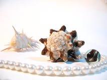 Shelles y perla Imagen de archivo libre de regalías