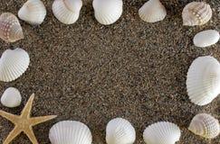Shelles y piedras Fotografía de archivo