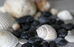 Shelles y piedras Fotografía de archivo libre de regalías