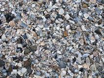 Shelles y piedras mezclados Imagenes de archivo