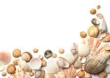 Shellfeld auf weißem Hintergrund Lizenzfreie Stockbilder