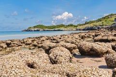 Shellfelsen-Körper- und Seehintergrundbeschaffenheit lizenzfreie stockfotos
