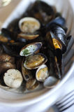 Shellfish. Dish of mixed shellfish of the Limski Kanal (Croatia Royalty Free Stock Photos