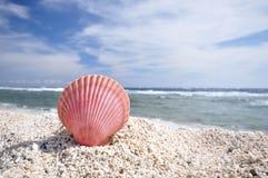 A shellfish Royalty Free Stock Photography