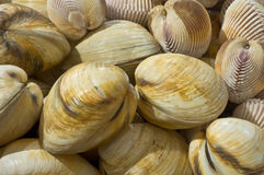 Shellfish Fotografia Stock