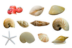 Shellfish. This picture is a group of shellfish Royalty Free Stock Photo
