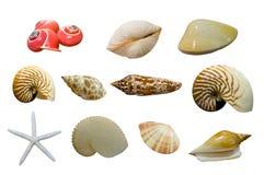 Shellfish Zdjęcie Royalty Free