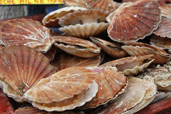 Shellfish Royalty Free Stock Photography