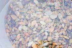 shellfish Obraz Royalty Free