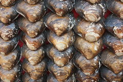 Shellfish Royalty Free Stock Image