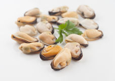 Shellfish Stock Image
