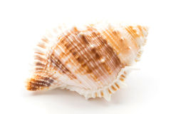 shellfish photos stock