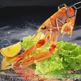 Shellfish Royalty Free Stock Images