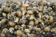 shellfish image stock